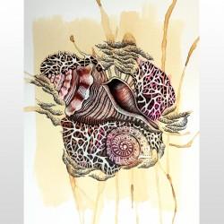 Shells Series Art Print 3